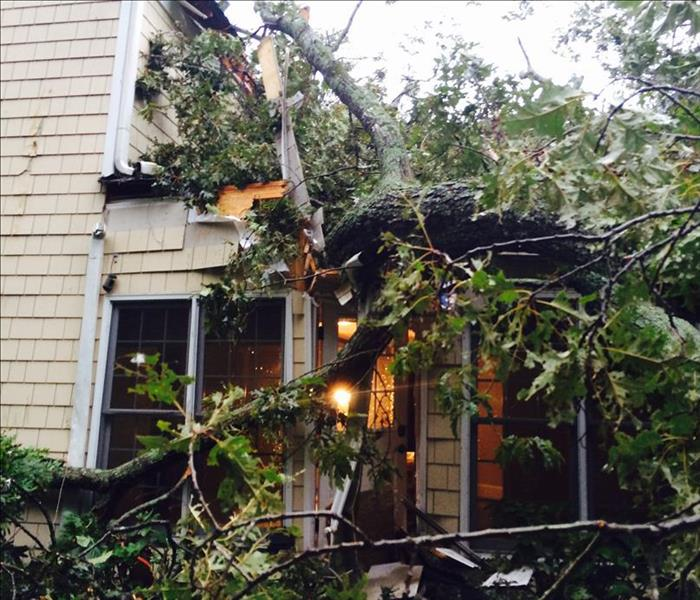 Tree Falls Can Cause Serious Damage to Your Property